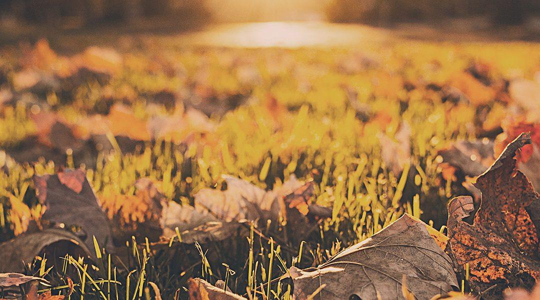 Månadsavstämning: oktober